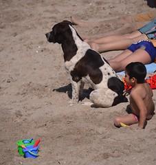 Watch Dog (Ctuna8162) Tags: chile beach playa dog kid toy antofagasta