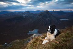 Noble but Tired (svensl) Tags: torridon scotland schottland scottish highlands maol chean dearg achnashellach bert border collie pet canine