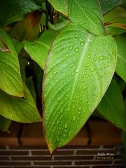 (352/16) Primeras lluvias de otoo (Pablo Arias) Tags: pabloarias photoshop nxd texturas planta follaje hoja casa jardn paracuellosdejarama madrid comunidaddemadrid
