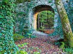 20161015Brcke-11 (s.schulthess) Tags: bridge brcke bro pont wald forest frat baum tree arbre wasser water bach river moos landschaft landscape natur nature schweiz switerland