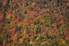 Patchwork indien (sviet73) Tags: canada forillon parc qubec gaspsie nature automne couleur arbre fret