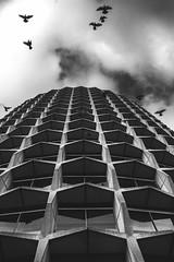Fledge. (ThePhotographersRepublic) Tags: brutalistarchitecture brutalism blackandwhite blackwhite lookup architecture clouds a7r canonef35mmf14l canon fullframe pigeon londonpigeon contrast concrete