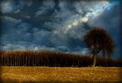 landscape (stempel*) Tags: gambezia polska poland polen polonia landscape mazovia mazowsze tree field