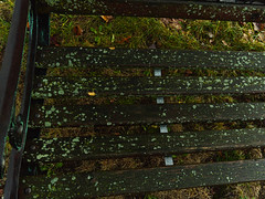 Leaves, Grass, Lichen, Slats (Paul Henegan) Tags: autumn availablelight bench handheld lawn leaves lichen rainymorning