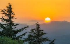 Sundown in Tbilisi (martin palmqvist (ALBUMS)) Tags: georgia tbilisi sunset sundown spruce colors warm summer july caucasus