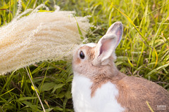 IMG_1643.jpg (ina070) Tags: animals canon6d cute grass outdoor outside pets rabbit rabbits