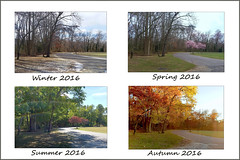 The Four Seasons Of 2016- 11-09-16 (MelenaMe) Tags: seasons season collage fourseasonscollage spring summer autumn fall winter snow ice colors path road walkway nature