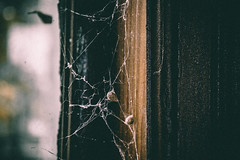 @FYABRIANSCOTT (fya_brianscott) Tags: spider web cobweb life explore abandoned window sun sunlight day light time world emo mood simplicty beauty beautiful animal nature chruch nikon fyabrianscott creepy horror