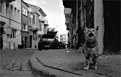 dci_004 (la_imagen) Tags: ürkei turkey türkiye turquía istanbul istanbullovers ayvansaray kedi katze cat sokak sw bw blackandwhite siyahbeyaz  monochrome strasenfotografieistkeinverbrechen street streetandsituation streetlife streetphotography