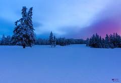 ''Lumire d'hiver!'' (pascaleforest) Tags: paysage landscape passion nikon sigma winter hiver matin sunrise leverdusoleil nature ciel sky snow sapin neige couleur color qubec canada nuage cloud fort forest