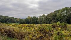 DSC_6281 Bois Poret (yves62160) Tags: paysage automne bois prairie artois villersaubois