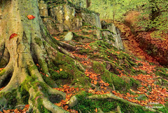 Autumn Carpet (Peeblespair) Tags: autumn woods treetrunk moss autumnleaves highforcefalls peeblespair photography