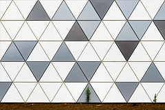 In stark contrast (Maerten Prins) Tags: nederland netherlands nijmegen lent oosterhout wall facade nieuwbouw new tiles triangel triangles grey shades sporthal lines edges contrast graphic single lonely small plant pattern urban nature abstract minimal minimalism geometric triangle grid architecture