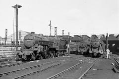 Birkenhead Shed (Gricerman) Tags: 42932 48684 48290 class8f 6p5fclass birkenhead birkenheadshed steam steambr steammidland midland midlandsteam midlandsteambr br britishrailways brsteam brmidland lms