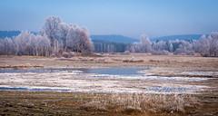 V_109  Frost und Raureif (wenzelfickert) Tags: frost raureif voralpenland eis ice rime deutschland germany bäume trees oberbayern umgbenediktbeuern bayern bavaria landschaft landscape wald forest