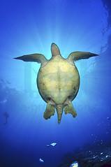 2012 07  METTRA OCEAN INDIEN 0045