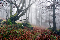 Urbasa (Mimadeo) Tags: morning autumn light mist tree green nature wet rain misty fog mystery forest leaf moss haze mood branch path foggy trail rainy mysterious trunk hazy beech pathway wetness