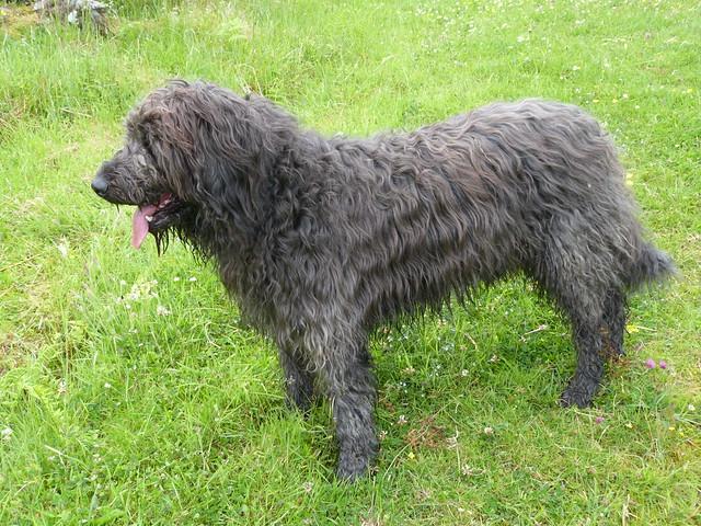 Dougal large image