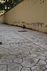 Frascigatto (Colombaie) Tags: roma muro sanlorenzo acqua pioggia gatto animali vento micio micia gatta grandine bufera pozzanghera trombadaria bagnata disappunto grandinata asciugarsi
