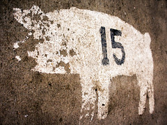 Number 15 (Gary Breashears) Tags: animal pig stencil fair number numbers hog 4h livestock fifteen