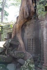 20130825-DSC_6114.jpg (toshworld) Tags: 35mm nikon cambodia f14 14 sigma angkorwat siem reap siemreap angkor wat taprohm 35 ta d800 prohm 3514   hsm  sigma35mmf14hsm
