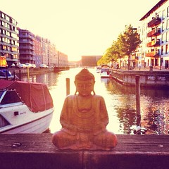Advayasiddhi   Sunshine from Copenhagen  Thanks for all your engagement during this week   it's been lovely to hear your stories, to see photos from all round the globe and to witness all your efforts. So heartening to know there is so much metta and inte