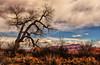 Landscape Extraordinaire (Jeff Clow) Tags: tree nature landscape desert moabutah phototour professorvalley ©jeffrclow jeffclowphototour moabphototour