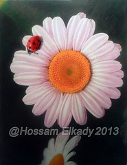 Margaret flower with ladybird Acrylic on canvas 5061 cm. (Hossam ElKady) Tags: abstract art painting artist finearts   hossam hosam  elkady   hossamelkady  elkadi