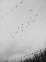 Flock Together (rougenoirphoto) Tags: seattle sky urban bird birds plane airplane fly flying pattern stripes flock flight aeroplane georgetown wires uploaded:by=flickrmobile flickriosapp:filter=nofilter