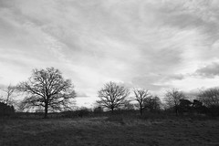 Sint-Martensheide (nikjanssen) Tags: nature clouds landscape eiken beek oaks landschap