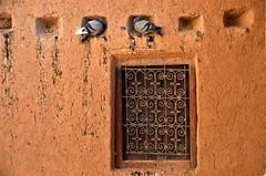 Skoura, duiven rustend in een muurnis van de kasbah Amridil, Marokko 2013 november (wally nelemans) Tags: window pigeons morocco maroc marokko duiven kasbah venster skoura 2013 amridil