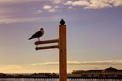 Seagull and Pier (Crisp-13) Tags: sea sky pier brighton flag seagull pole hdr