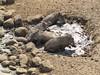 Rosslyn Mud Spa