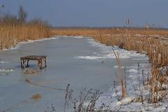 Zima na bagnach (September Songs) Tags: winter reed zima marshes bagna trzcina biebrzanationalpark biebrzaskiparknarodowy