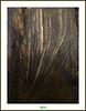 BOSCO DI GRADO (régisa) Tags: wood tree arbol italia albero arbre baum bois bosco gardo mygearandme flickrstruereflection1 flickrstruereflection2