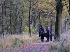Recreation in Vegelin woods St Nicolaasga, Eysinga State (Alta alatis patent) Tags: vegelinbossen eysingastate landscape woods horseriding frisian hynder