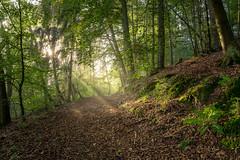 Illuminated path (Sebo23) Tags: licht lichtstimmung gegenlicht light morgenstimmung morninglight wald forest sunstar lightbeam canon6d canon24704l