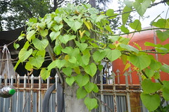 WKK_8729 (kongkham35@hotmail.com) Tags: watluangphorsothon nikond7000 nikon1685 thailand chachoengsao