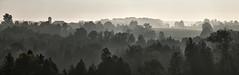 Grand River Valley above West Montrose (virgil martin) Tags: grandriver grandrivervalley fog haze trees panorama landscape westmontrose waterlooregion ontario canada olympusomdem5 oloneo microsoftice gimp