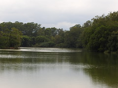 DSCN0269 (apacheizabel) Tags: lago pássaros árvores céu pinhas tronco espelho dágua queroquero rolinhas banco no bosque família de galinhas passeio parque centro aeroespacial da aeronáutica cta são josé dos campos sp