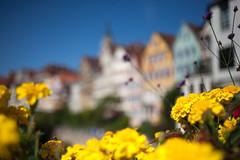 """T""""bee""""ngen... (Hans-Franz) Tags: tbingen 5d carlzeissjenamcflektogon35mmf24 bee abeille biene classic canon blumen flowers fleurs"""