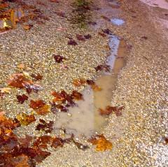 autunno (dina.elle) Tags: foglie pozzanghera sassi sassolini ghiaia colori autunno rosso riflesso torbida acqua pioggia
