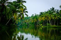 The Poorvar Backwaters, Kerala (Vedaante) Tags: kerala kerela backwaters holidays vacations green greenery nature travel india coconut river amazon flora foliage landscape beautiful reflections water