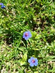 Farm Visit (SoulRiser) Tags: nature flowers