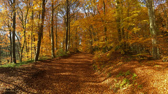Autumn awesome colors (panoround hutter) Tags: austria autumn automne herbst europe österreich trees niederösterreich november today colorsofday autumncolors amazing life vida walking nature natur hutterdesign