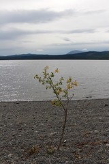 On the Beach (demeeschter) Tags: canada yukon territory highway landscape scenery lake mountains road forest nature teslin town