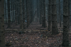 tipi (thedecentexposure) Tags: forrest deutschland europa germany outdoor wood europe tipi wald