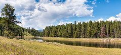 The Calm Before The Falls - Explore (Ron Drew) Tags: nikon d800 yellowstonenationalpark nationalpark yellowstone wyoming river yellowstoneriver summer flowers trees clouds haydenvalley