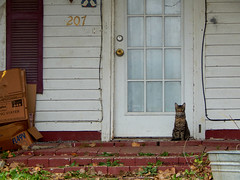 cat on porch (Girl takes pics) Tags: cat frontporch