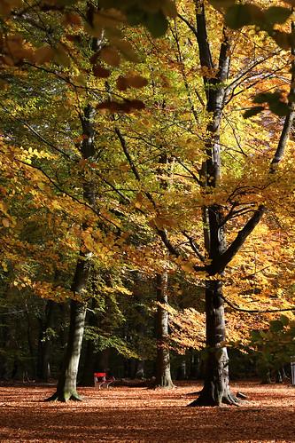 Autumn in Helsingborg 4